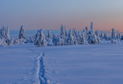 gitsfjallet, vasterbotten, sweden, lapland, winter, snow, tree, nature wallpaper