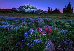 mount rainier national park, washington, usa, mountains, nature, wild flowers wallpaper