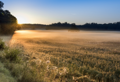 morning, field, fog, light, mist, nature wallpaper