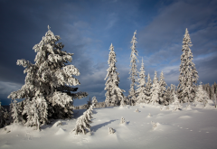 nordseter fjellpark, lillehammer, norway, tree, snow, nature wallpaper