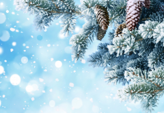 new year, christmas, snow, tree, needle wallpaper