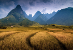 Vietnam, nature, landscape, mountain, clouds, field, trees, forest, spikelets, hill wallpaper
