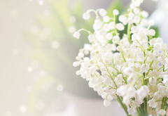 lily of the valley, convallaria majalis, glare, blur, flowers, nature wallpaper