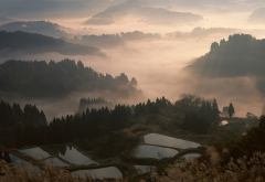 nature, landscape, mist, sunrise, valley, forest, mountain, terraces, water, trees, Japan wallpaper