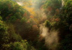 nature, landscape, fall, forest, mountain, mist, morning, trees, sunrise wallpaper