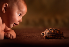 baby, turtle, curiosity, friend, childwood, explore, photo wallpaper