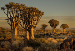 Namibia, Africa, nature, landscape wallpaper
