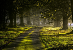 nature, landscape, sun rays, road, trees, sunrise, grass, green, fence, leaves, mist, moss, morning wallpaper