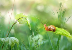 summer, grass, snail, close-up, nature wallpaper