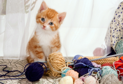 kitten, cat corner, furry friends, cat, animals, knitting wallpaper
