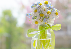 daisies, forget-me-not, bouquet, ribbon, bottle, bokeh, nature wallpaper