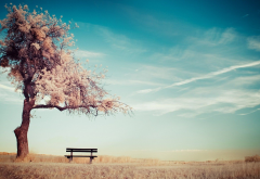 alone, trees, benches, sky, ground wallpaper
