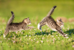 cat, kitten, beautiful, cute, animals, fun wallpaper
