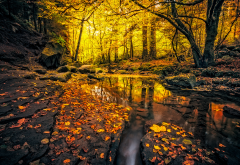 nature, autumn, germany, forest, leaves, stones wallpaper