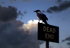 crow, sign, birds, animals, dead end wallpaper