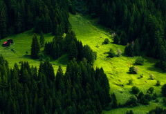 switzerland, forest, meadow, fir, nature wallpaper