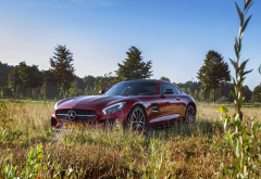 nature, field, grass, cars, mercedes-benz wallpaper