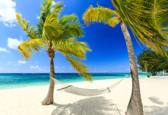 resort, palm trees, vacation, hammock, beach, ocean, caribbean beach wallpaper