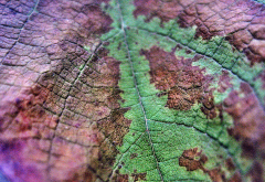leaf, close-up, macro, nature, autumn wallpaper
