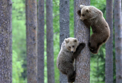 forest, bears, tree, teddy-bears, brown bear, animals wallpaper
