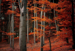 forest, tree, leaves, autumn, nature wallpaper