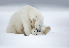 polar bear, snow, winter, bear, animals wallpaper
