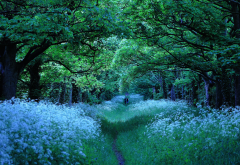 merseyside, england, thornton hough, wirral countryside, forest, tree, flowers, walking paths, nature, alley wallpaper