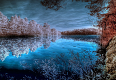 forest, lake, water, tree, reflection, nature, frost wallpaper