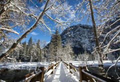yosemite national park, california, winter, snow, tree, bridge, river, usa, nature wallpaper