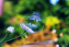 flowers, bubble, close-up, nature wallpaper