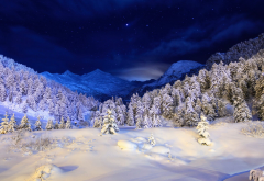 snow, mountains, winter, tree, sky, night, forest wallpaper