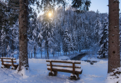 winter, forest, park, bench, tree, spruce, creek wallpaper