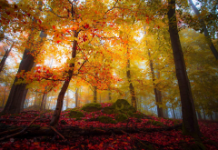 landscape, nature, forest, fall, colorful, trees, leaves, sunlight, mist wallpaper