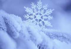 snowflake, frost, macro photo, nature, snow, winter wallpaper