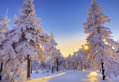 winter, snow, tree, sun, clear sky, nature, snowy forest wallpaper