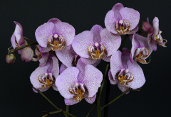 orchids, flowers, leaves, nature, bloom, exotic wallpaper