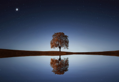 water, reflection, tree, night, stars, moon wallpaper