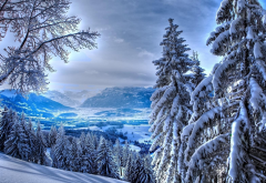 landscape, spruce, tree, snow, winter, nature wallpaper