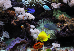 aquarium, fish, coral, underwater, water wallpaper