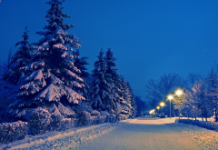 winter, snow, alley, park, tree, nature wallpaper
