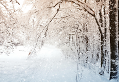 winter, nature, tree, snow wallpaper