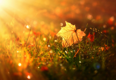grass, sun, macro, autumn, leaf, nature wallpaper