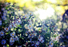 wildflowers, summer, sun, glare, blur, flowers, nature wallpaper