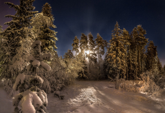 moon, forest, pine trees, snow, night, lunar halo, winter, nature wallpaper