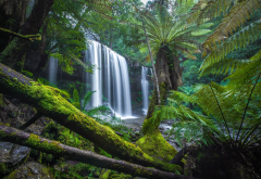 russell falls, nature, waterfall, cascade, tasmania, palm, tropics wallpaper