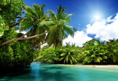 nature, summer, beautiful, palm trees, tropics, seychelles, palm, sea wallpaper