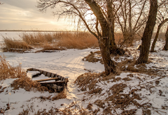 tree, reeds, snow, boat, winter, lake, nature wallpaper