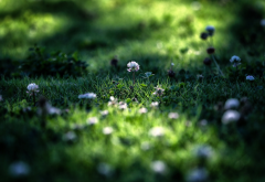 grass, summer, macro, nature wallpaper