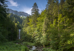 leuenfall, appenzell, forest, grass, tree, waterfall, alps, mountains, nature wallpaper