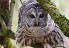 motley owl, branches, owl, bird, animals wallpaper